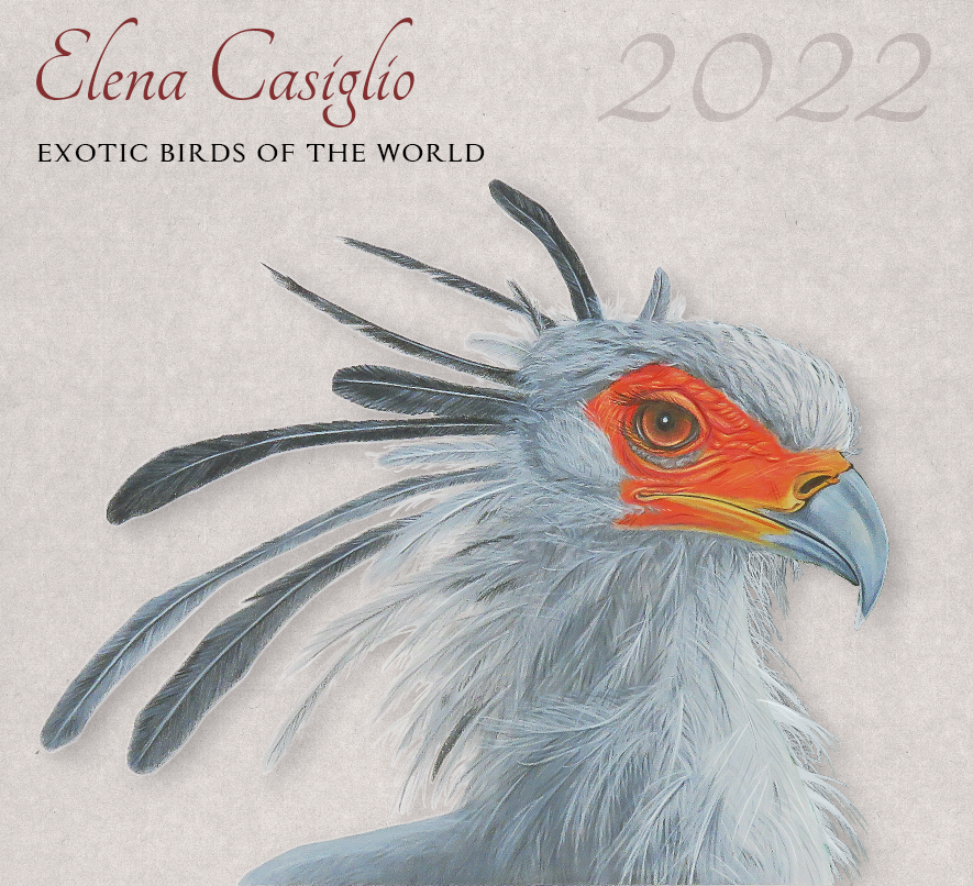 Cover for Exotic Birds of the world 2022 illustrated  calendar. Secretary Bird on the cover